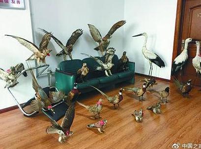主播晒珍贵鸟类标本遭举报 4名嫌疑人私藏枪支被抓